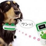 想知道你的狗都在对你说些什么吗