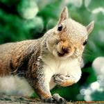 28张可爱的野生动物照片