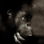 72张令人难以置信的动物照片