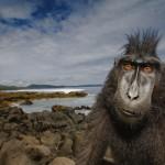12张令人难以置信的动物摄影照片