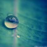 25张美丽的水滴微距摄影