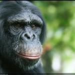25个极其逼真的动物CG绘画