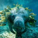 65个绝对惊人的水下摄影照片