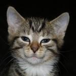 40张可爱的动物微笑摄影照片