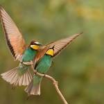 50张绝对让你震惊的鸟类摄影照片