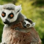 95张可爱又危险的野生动物摄影照片