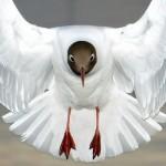 26张2010年7月NGC最佳动物摄影照片