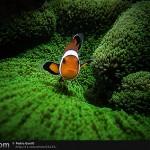 38张迷人的水下动物摄影照片
