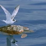 27张2010最佳自然摄影:海洋
