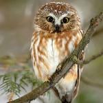 37张迷人的野生动物摄影照片