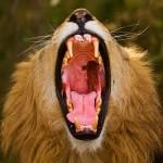 22张专业迷人的动物摄影照片