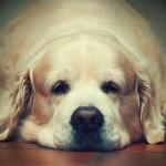 61张可爱的狗狗摄影照片
