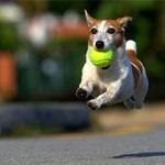 18张可爱的狗狗飞起来的摄影照片