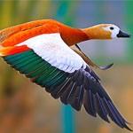 18张抓拍飞行中的鸟类摄影照片