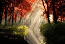 16张极美的阳光森林摄影照片