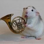22张创意可爱的老鼠摄影照片