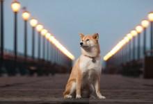 19张让你微笑的宠物摄影照片