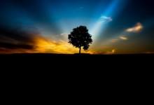 50张非常美丽的树摄影照片