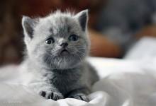 15张非常可爱的猫咪摄影照片