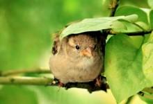 30张漂亮的鸟类摄影照片