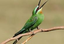 56张美丽的鸟类摄影照片