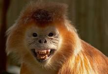 84张有趣的动物摄影照片