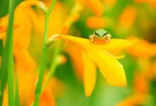 29张绿色的青蛙摄影照片