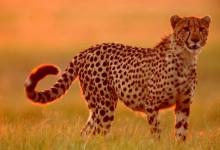 20张不错的动物摄影照片