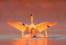 15张美丽的动物摄影照片