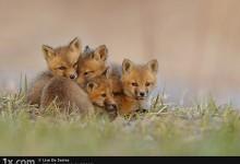 50张幼小可爱的动物摄影照片