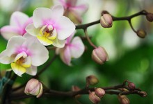 40张漂亮迷人的花朵摄影照片