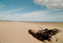 44张漂流的木头摄影照片