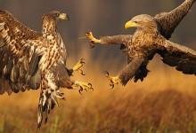 50张运动中的动物抓拍摄影照片