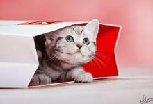 50张可爱的小动物摄影照片