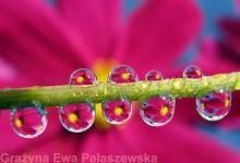 27张迷人的水珠微距摄影照片