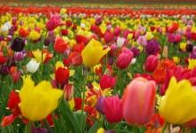 40张美丽的花朵桌面壁纸下载