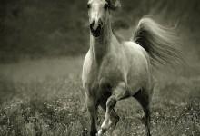 35张关于马的摄影照片