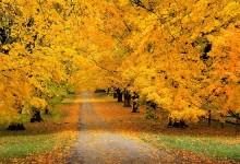 40张精美的秋天风景摄影照片