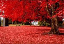 50张极美的秋天摄影照片