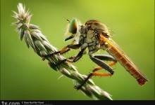 44张创意的昆虫摄影照片