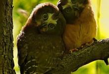 60张野外动物摄影照片欣赏