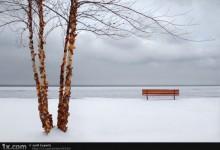 58张创意的冬季摄影照片