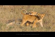 40张让你震憾的野生动物摄影照片