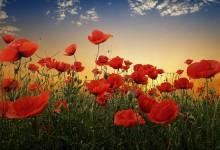 60张美丽漂亮的花朵摄影照片