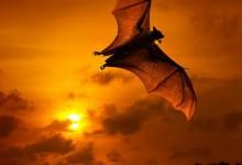 45张极美的日落黄昏摄影照片