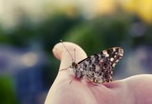 30张美丽的蝴蝶摄影照片