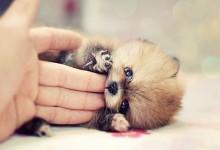 50张温暖可爱的动物摄影照片