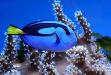 40个优秀的海底摄影照片