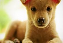 56张超级可爱的动物摄影照片