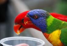 40张颜色艳丽的鸟类摄影照片